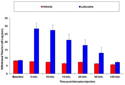 latency time in the rat model of nerve block