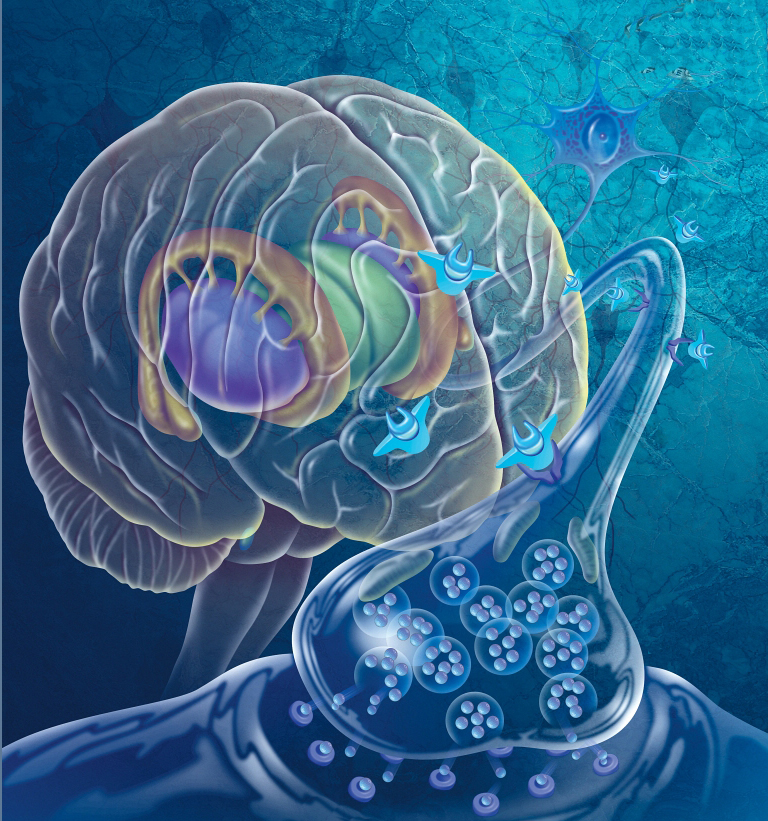 measuring cognitive impairment in oxygen deprivation and neurodegenerative disease models