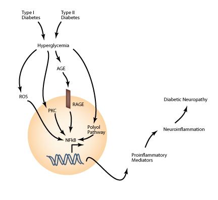 hyperglycemia diabetic neuropathy