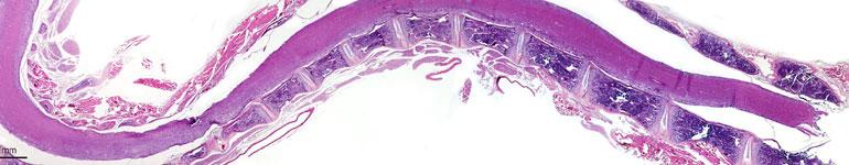 GLP-Histology-IHC-Services-Biomarker-Development-Preclinical-Research