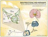 Pain processing and pathways