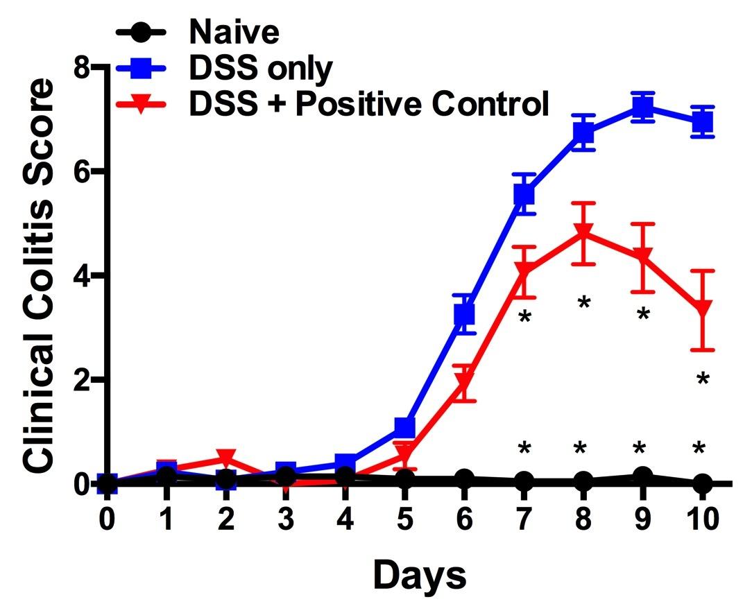 DSS Clinical Colitis Score.jpg