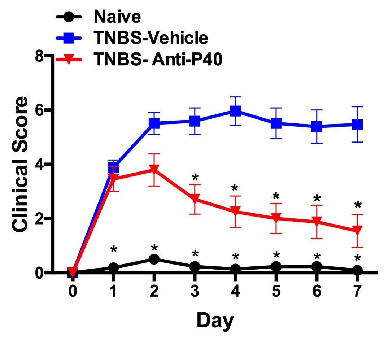 TNBS-Clinical_Score-No_Bud-no_Title.jpg