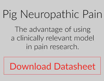 clinically relevant model of neuropathic pain